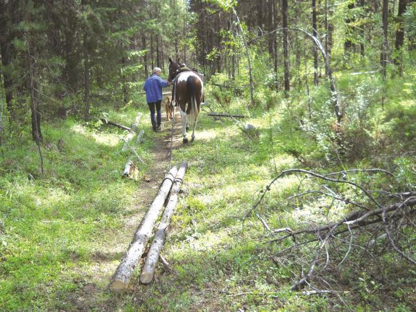 Trapping Creek Horse Trails