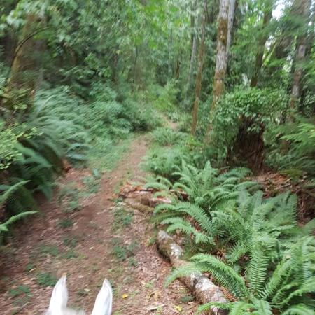 Grace Road Trails - North Cowichan Forest Lands